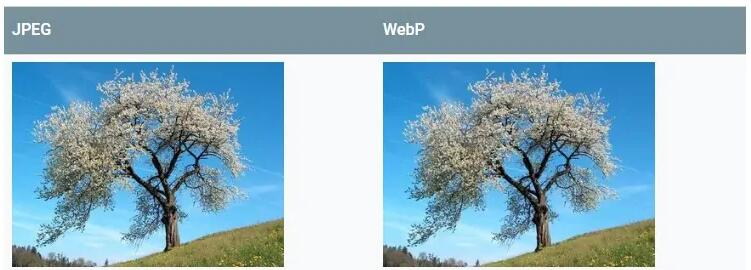 使用ShortPixel为你的WordPress配置WebP图片 图文教程